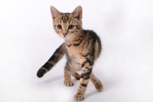 kitten-694918_640